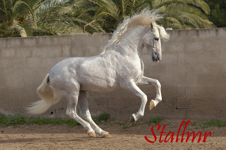 stallmr